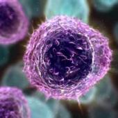 Продукты жизнедеятельности бактерий ротовой полости могут активировать ВИЧ в спящих Т-клетках
